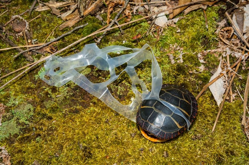 Plastik kirliliği Akdeniz'de kimyasal düzeylere ulaştı: Caretta carettalar ölüyor - 8