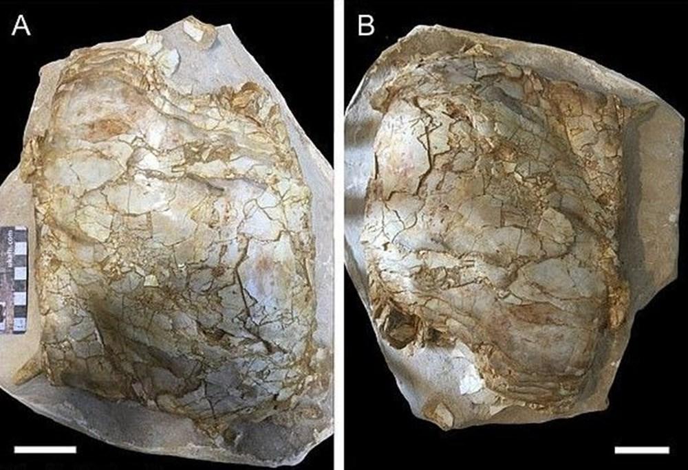 İngiltere'de 66 milyon yıllık balık fosili bulundu - 3