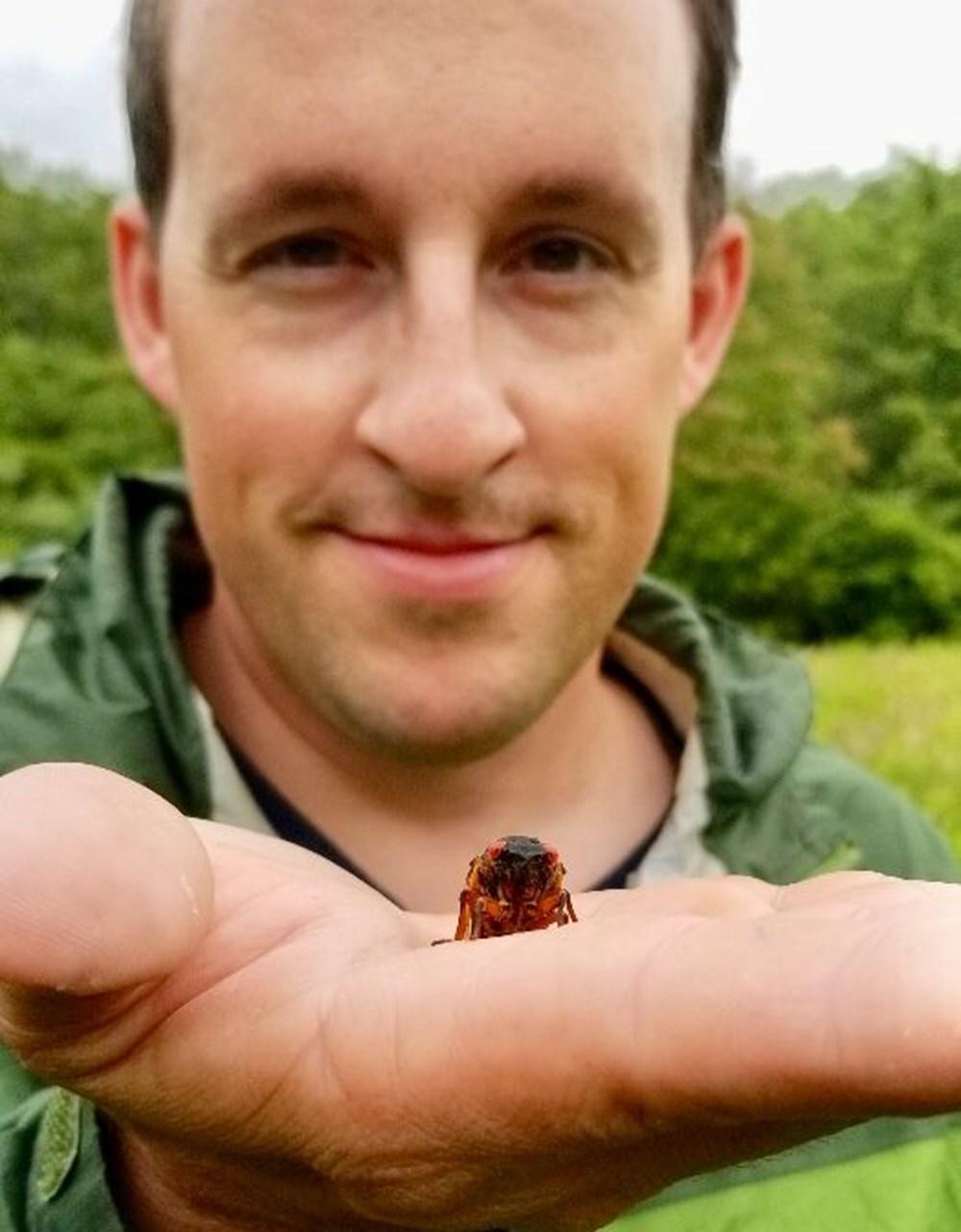 ABD'de corona virüsün ardından zombi ağustos böceği tehlikesi - 4