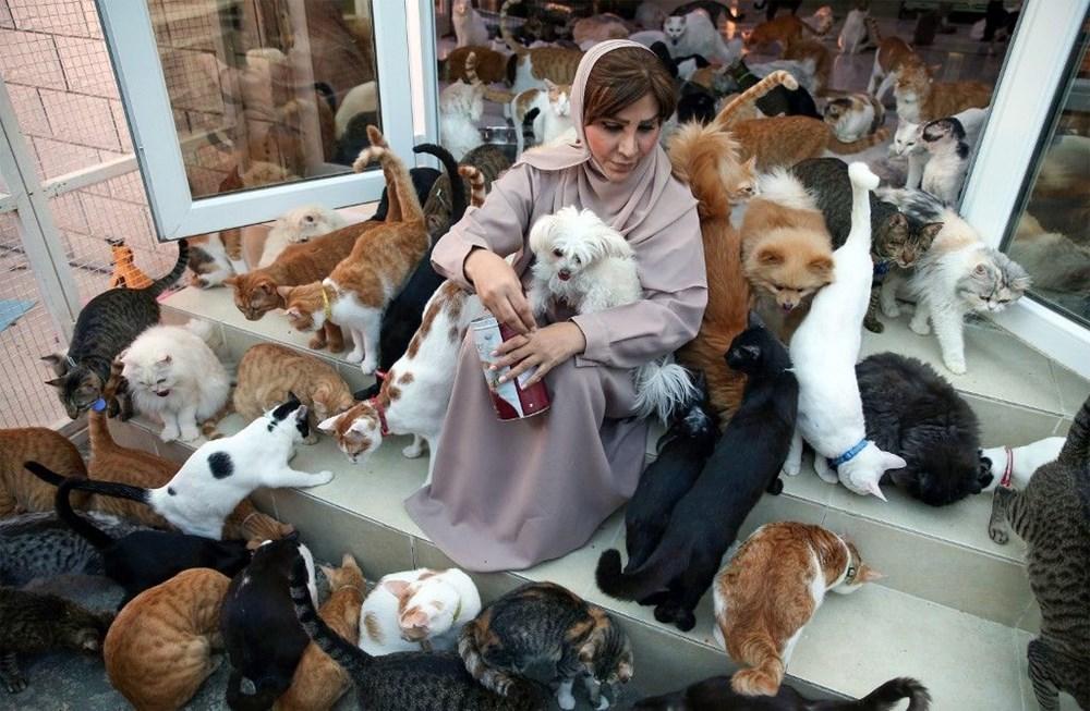 Evinde 480 kedi ve 12 köpeğe bakıyor - 3