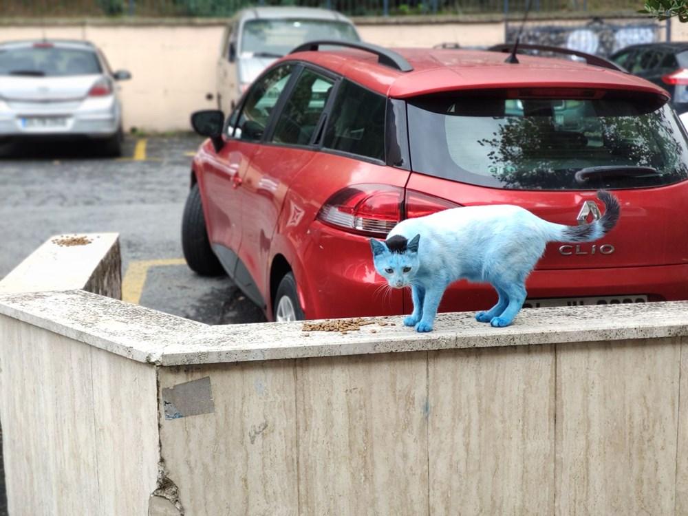 Mavi kediler görenleri şaşırttı - 4