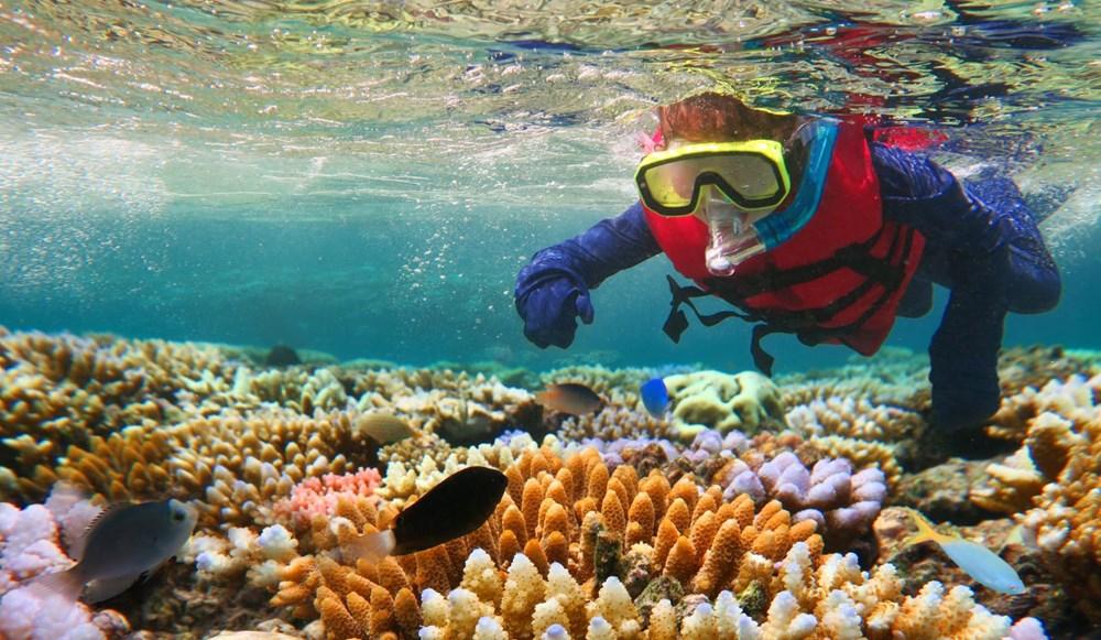 Büyük Set Resifi iklim değişikliği nedeniyle 2025'te yok olmaya başlayacak - 6