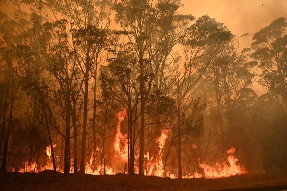 Rapora göre yangından etkilenen hayvanların sayısı 3 milyarı buldu.