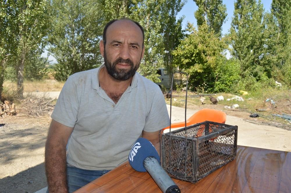 Afyonkarahisar'da nesli tehlike altında olan ağaç yediuyuru görüldü - 3