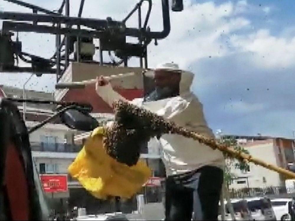 Hastanede panik: Acil servisi arılar bastı - 5