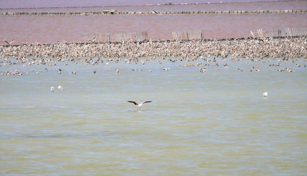 İzmir Kuş Cenneti'nde 18 bini aşkın yavru flamingo kreşte uçma hazırlığı yapıyor - 36