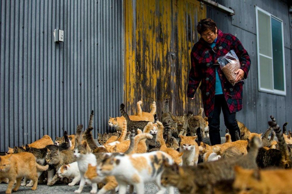 Japonya'daki kedi adası: Aoshima - 4