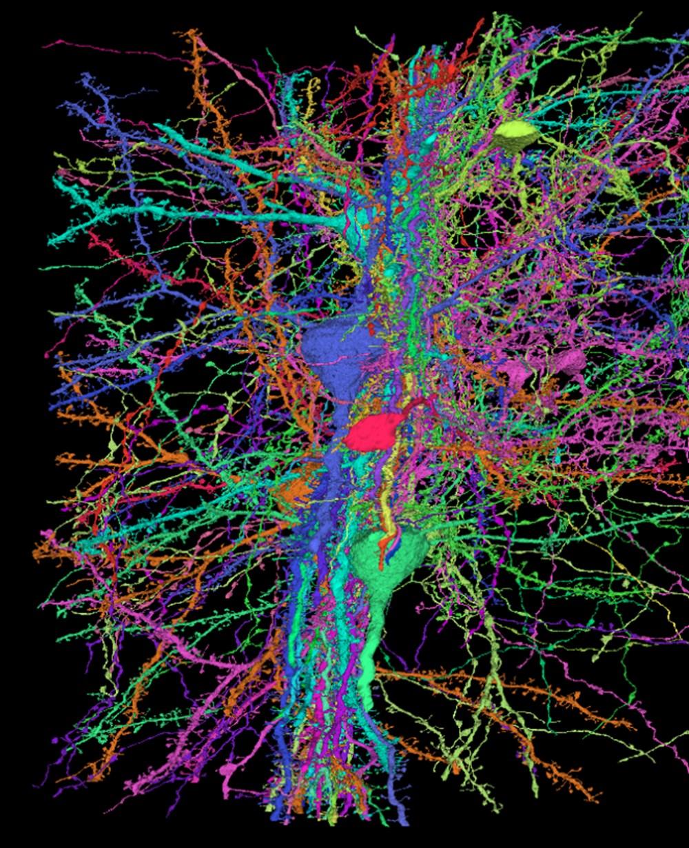 Google ve Harvard Üniversitesi, insan beyninin en detaylı haritasını oluşturdu - 1