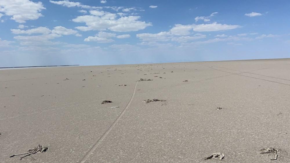 Tuz Gölü'nde toplu flamingo ölümleri: Soruşturma başlatıldı - 6