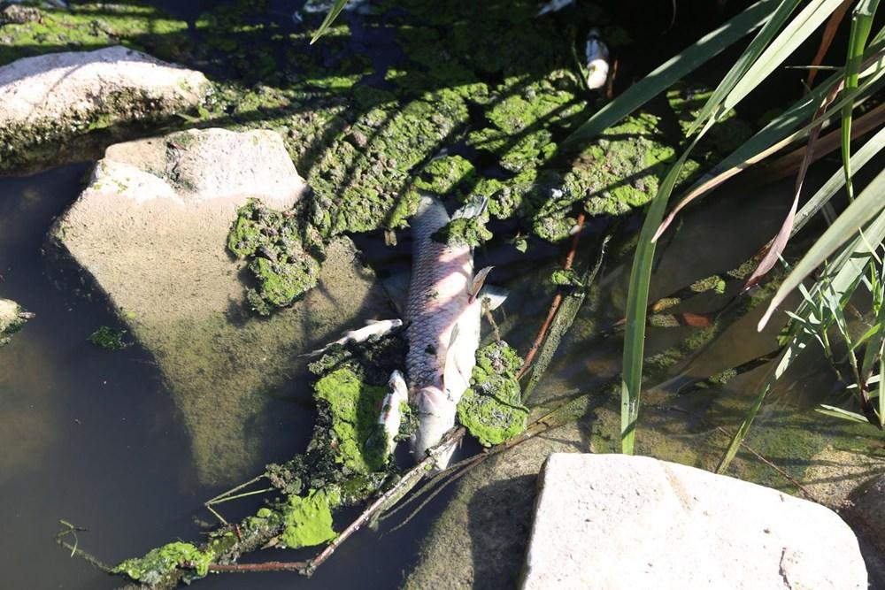 Yatağan Çayı'nda yüzlerce ölü balık kıyıya vurdu - 5