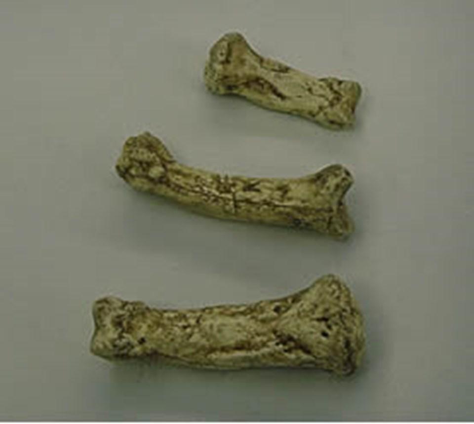 Ardi'nin parmak kemikleri.