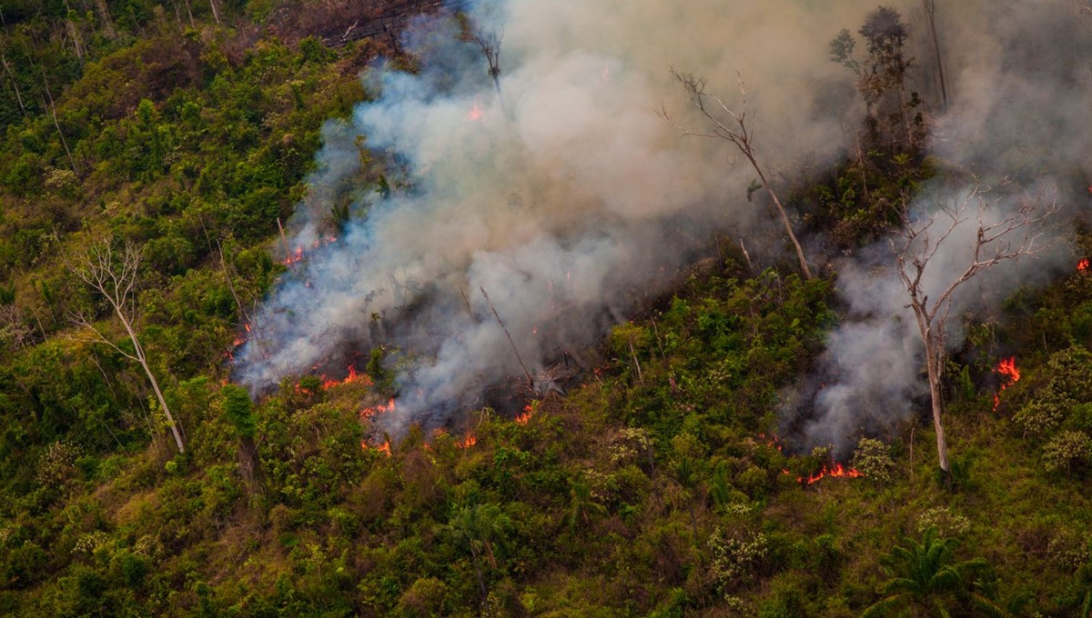 Amazon forests in Brazil produced more carbon dioxide than they stored in the last 10 years