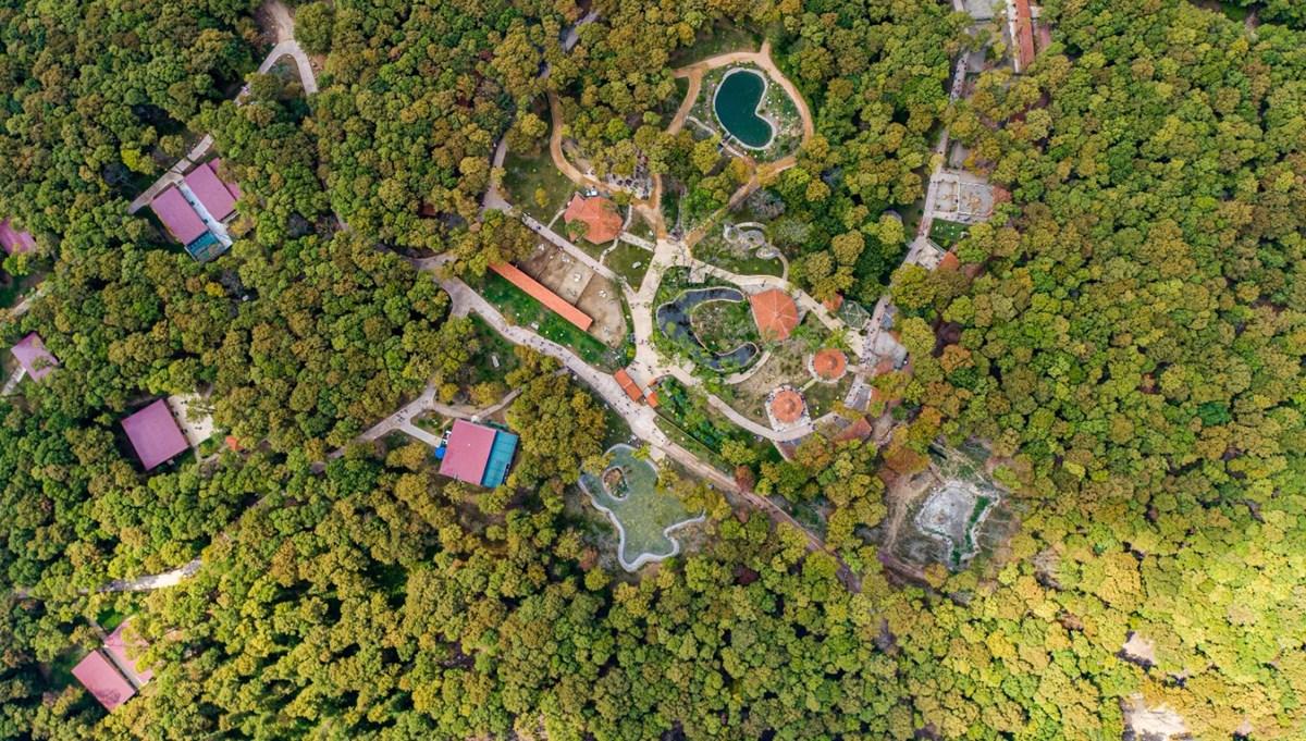 Avrupa'nın en büyük doğal yaşam merkezi Ormanya tatilcilerin vazgeçilmezi