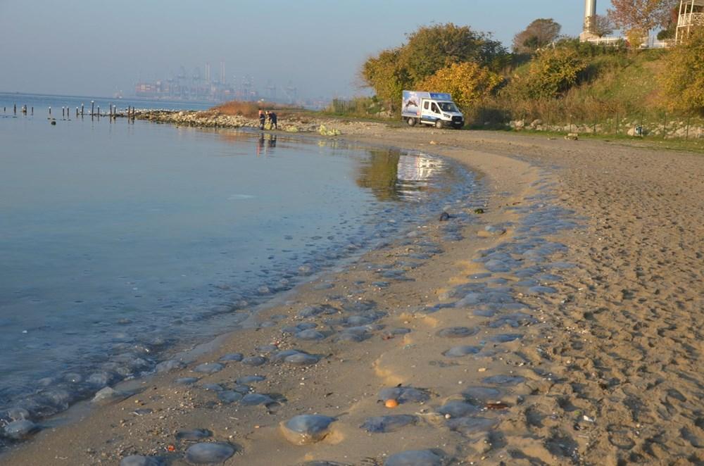 İstanbul'da korkutan dev denizanaları: Her biri en az bir kilo ağırlığında - 19