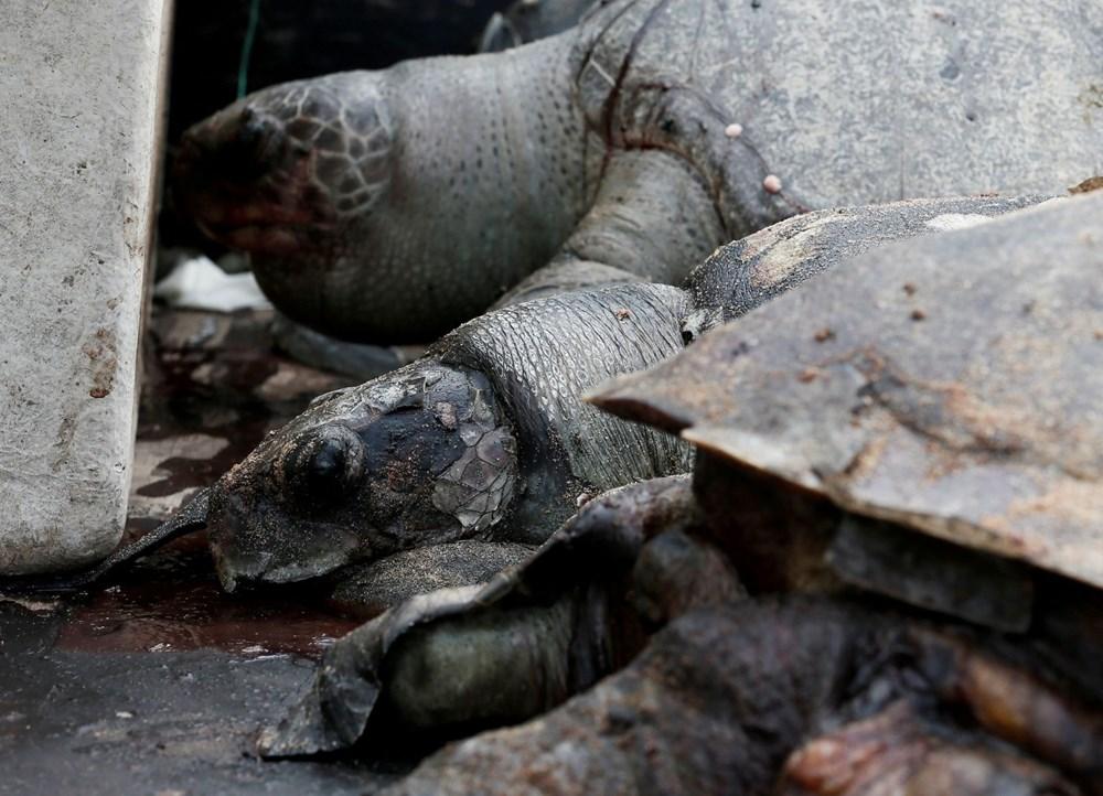 Yüzyılın en kötü çevre felaketlerinden: Onlarca yunus, balina ve kaplumbağa kıyıya vurdu - 5