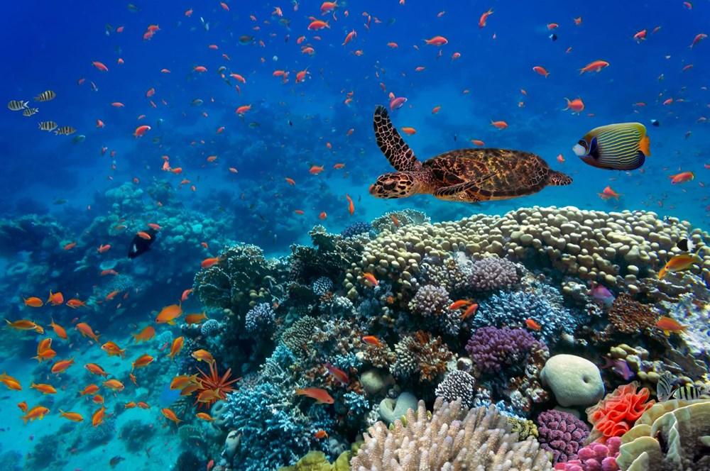Küresel ısınma, deniz yaşamının kaynağı olan mercan resiflerini yok ediyor - 8