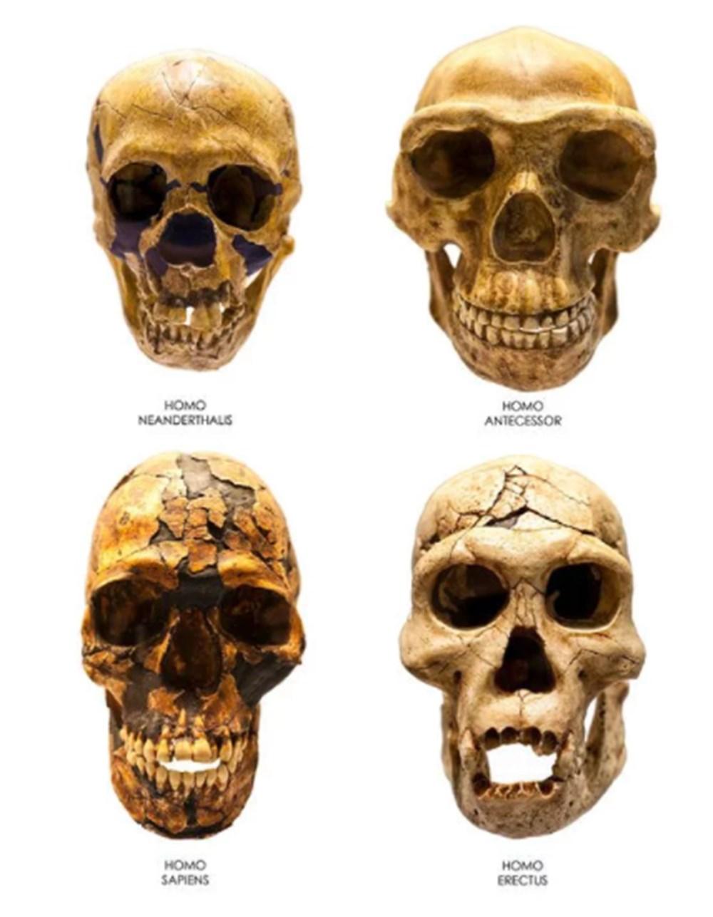 İklim değişikliği on binlerce yıl önce Neandertalleri yok etti - 5