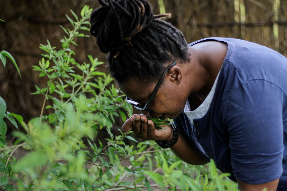 The plant that African country hopes for, Zumbani: We would be dead if we didn't use it - 7
