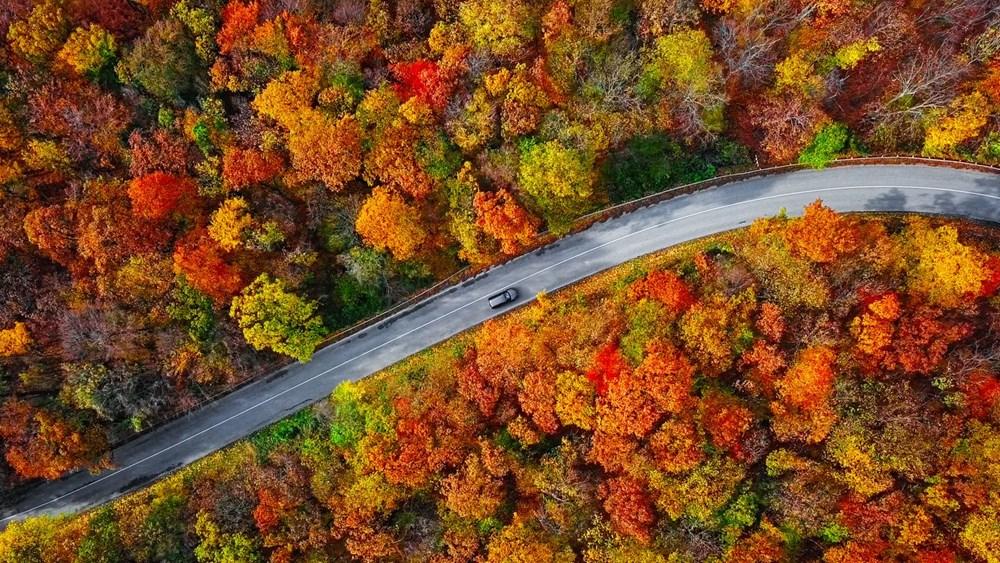Araştırma: Her üç ağaçtan biri yok olma tehlikesiyle karşı karşıya, hangi ağaçlar tehlikede? - 3