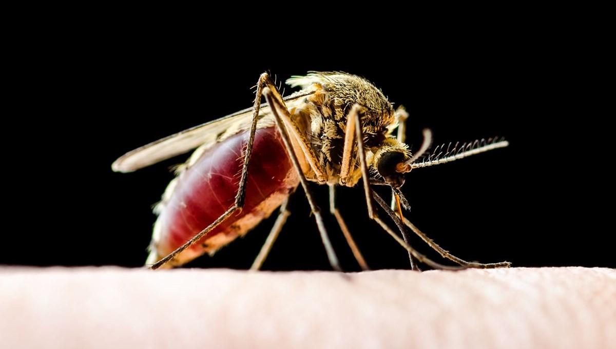 ABD'de et yiyen parazit alarmı: Küresel ısınma nedeniyle ölümcül hastalıktan 27 milyon kişi etkilenecek