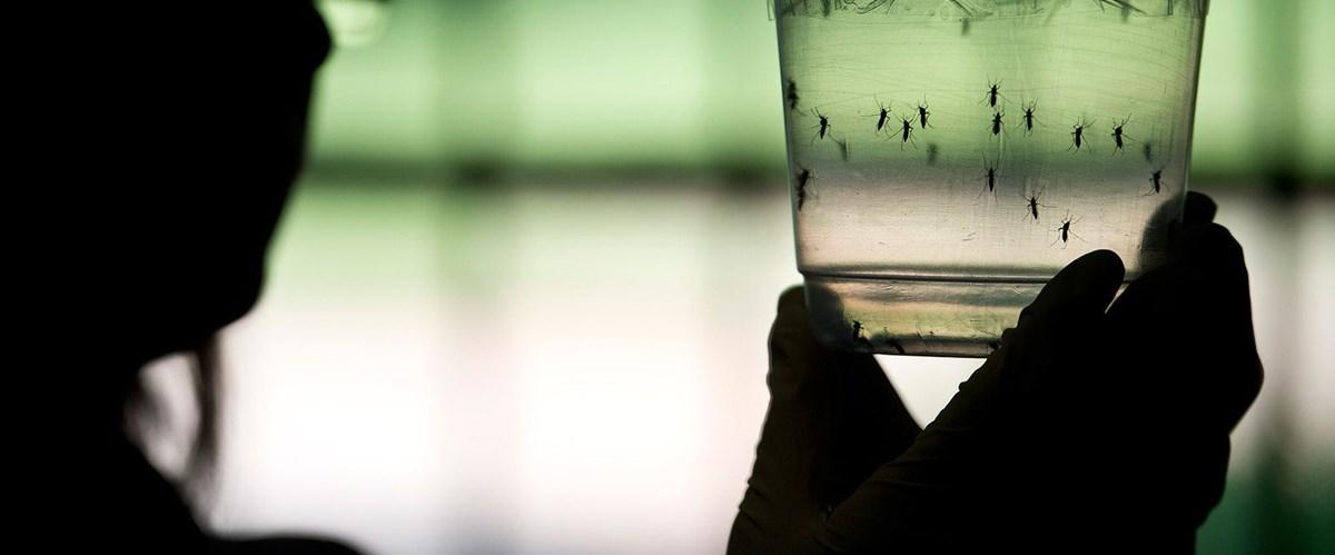 Zika virüsü nedir? Zika virüsünün belirtileri neler?