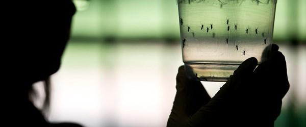 """Sağlık Bakanlığı'ndan """"zika virüsü"""" açıklaması"""