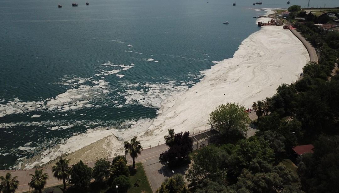 Bakanlıktan deniz salyasıyla mücadele genelgesi thumbnail