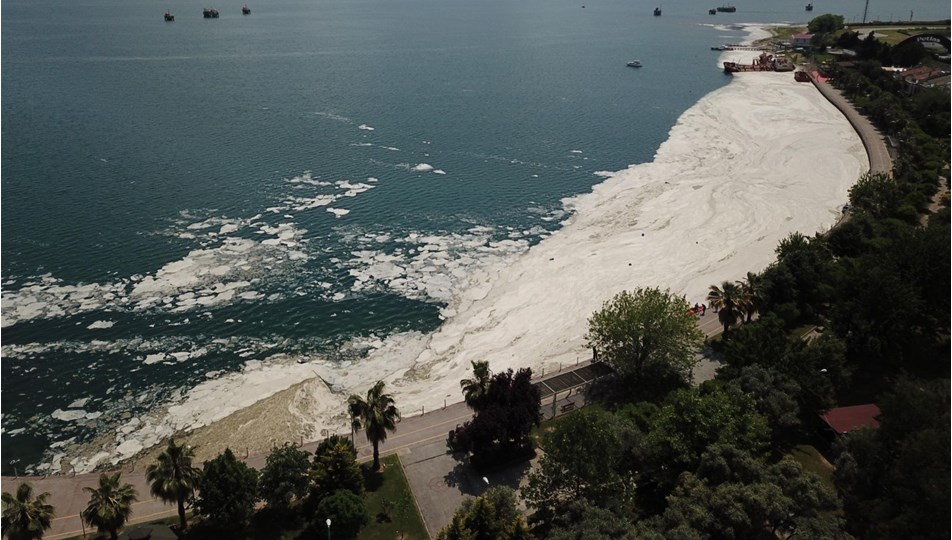 Bakanlıktan deniz salyasıyla mücadele genelgesi