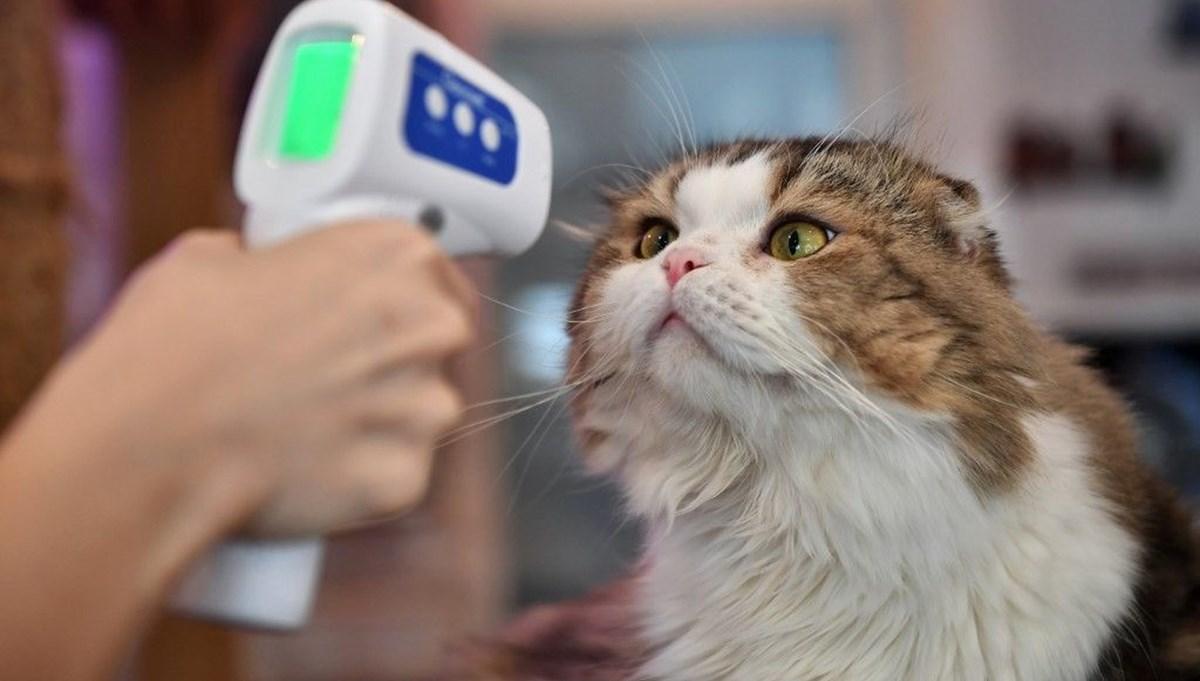 Araştırma: Corona virüsü bitirmek için evcil hayvanlar da aşılanabilir