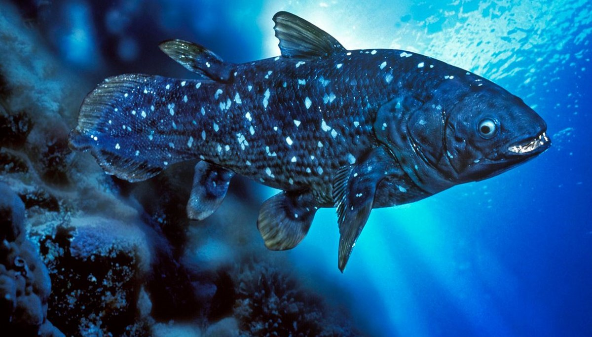 New discovery: 'Living fossil' fish lives 100 years, pregnancy lasts 5 years