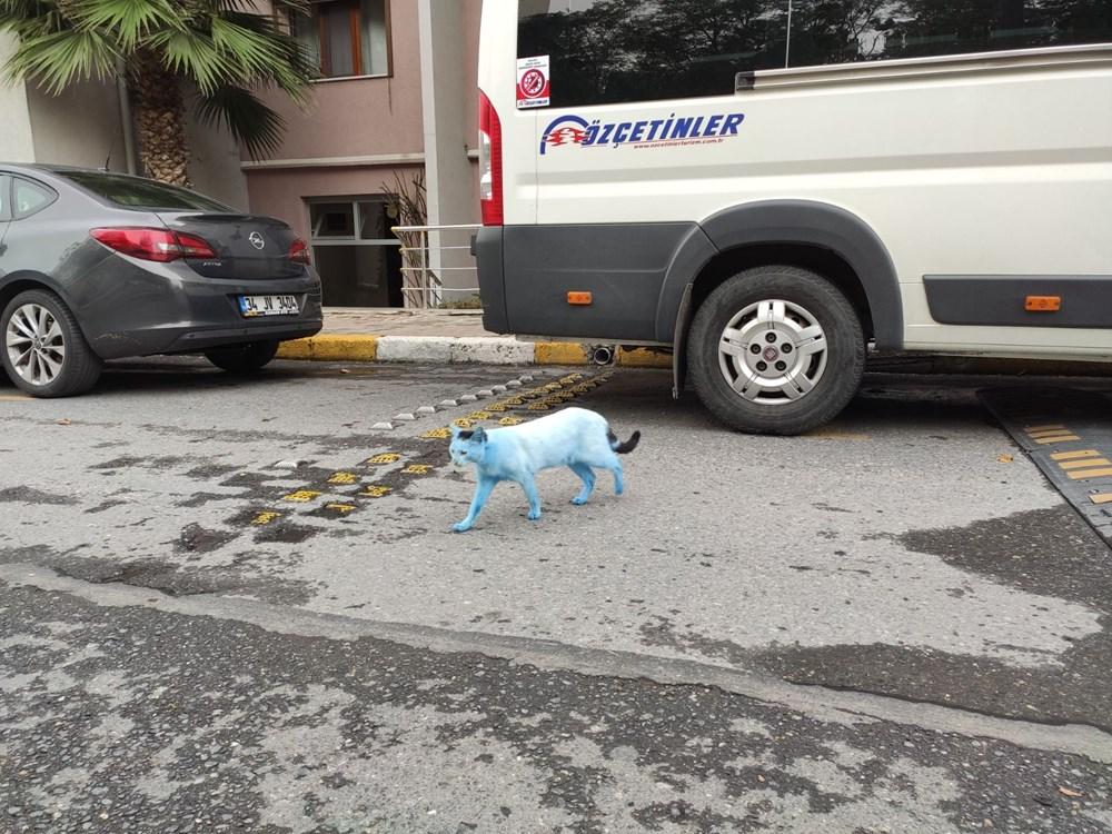 Mavi kediler görenleri şaşırttı - 5