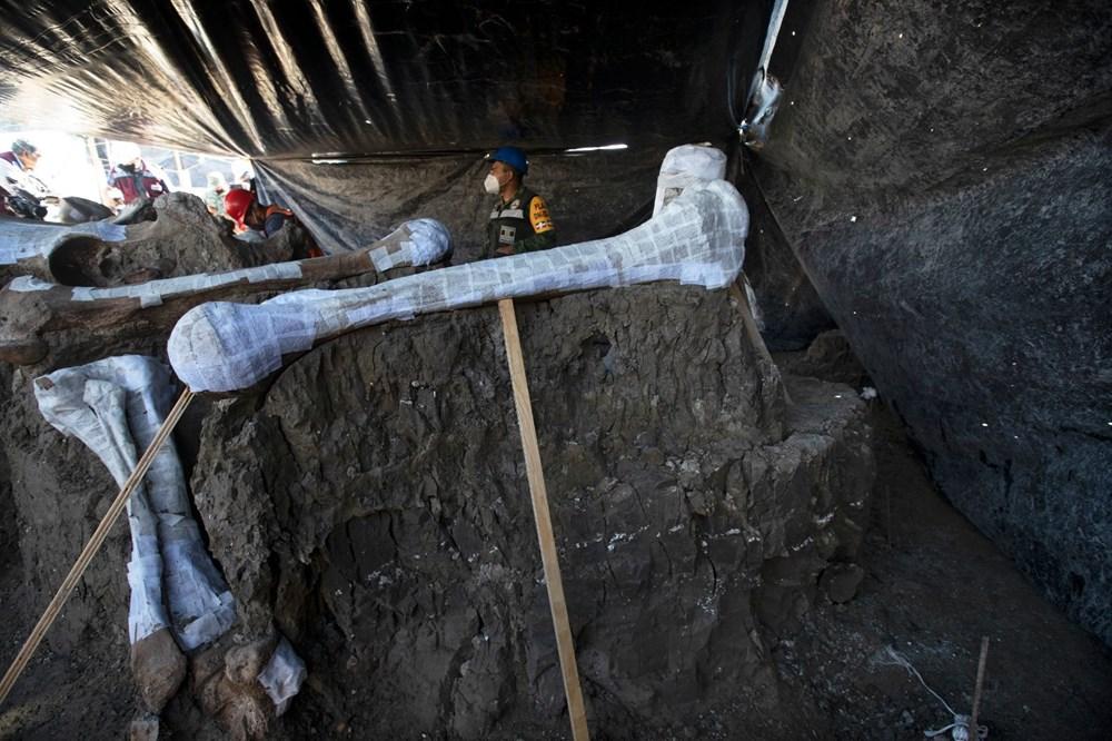 Meksika'daki sit alanında bulunan mamut fosillerinin sayısı 200'e yükseldi - 10