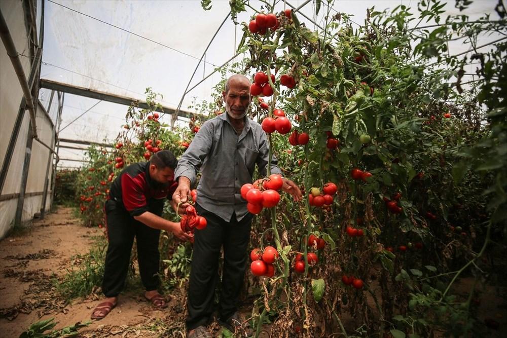 İsrail'in kararına tepki: Domates sapını tehdit gördüler - 11