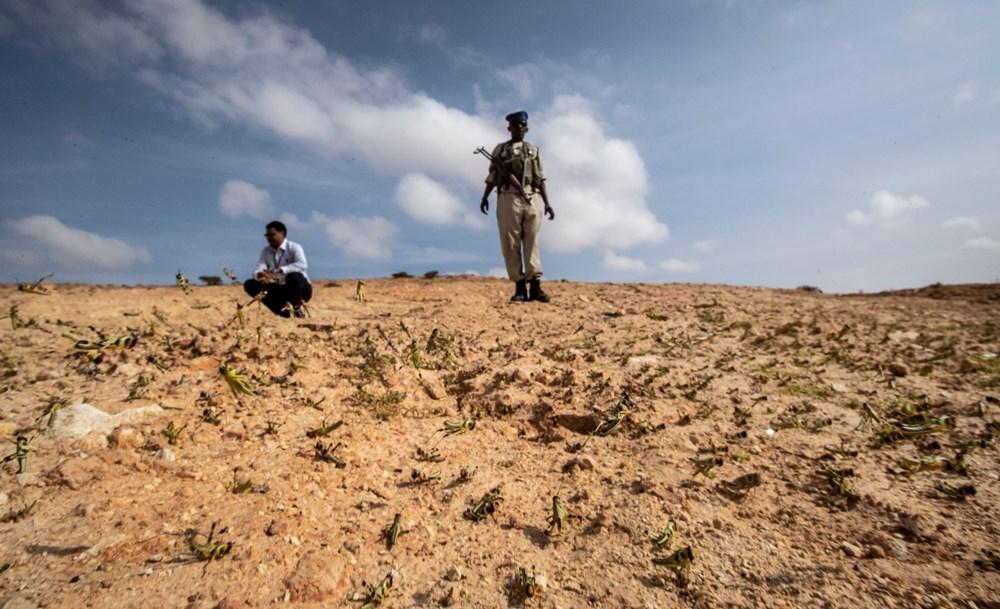 Somali, çekirge istilası nedeniyle OHAL ilan etti - 10