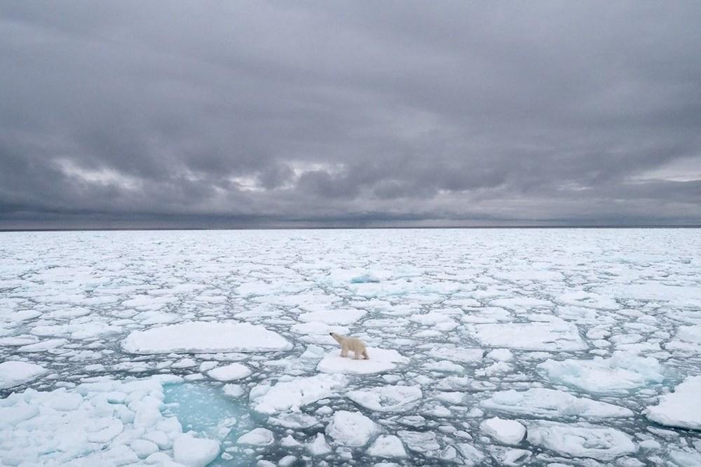Danimarkalı yetkililerden tepki çeken karar: Kutup ayısını vurabiliriz - 3