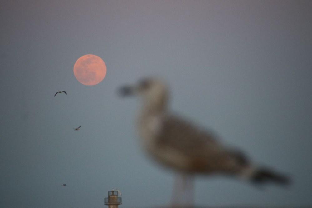 Yurttan 'Süper Solucan Ay' manzaraları - 12