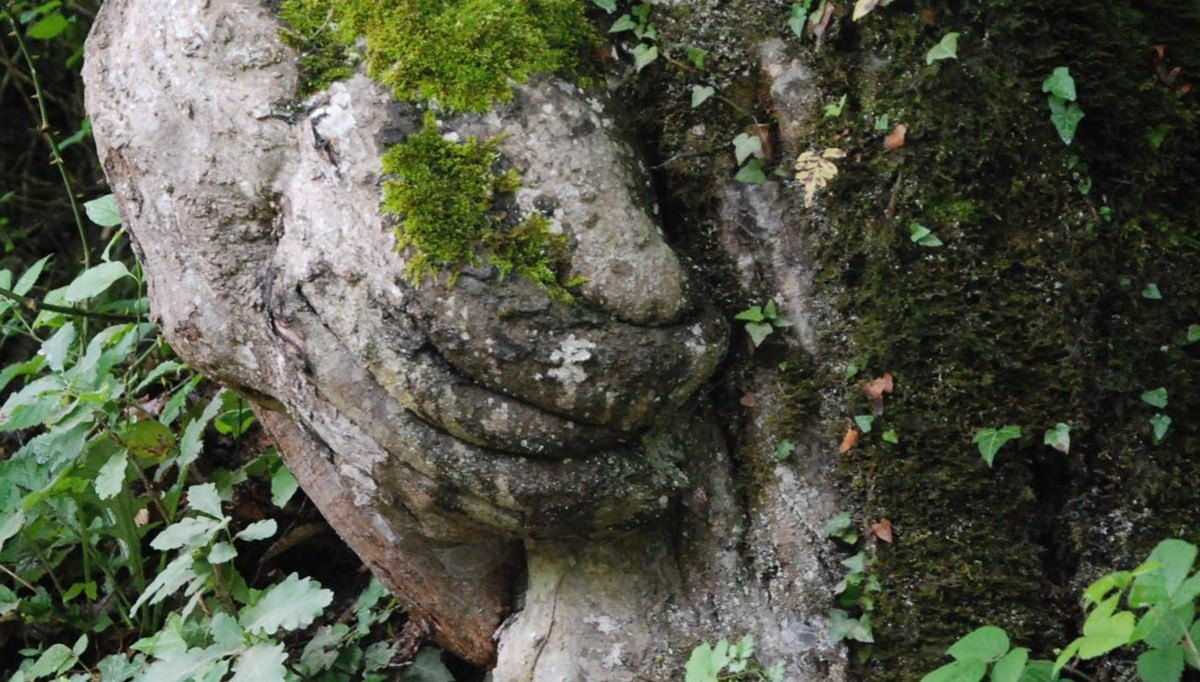 Hand figured tree under protection