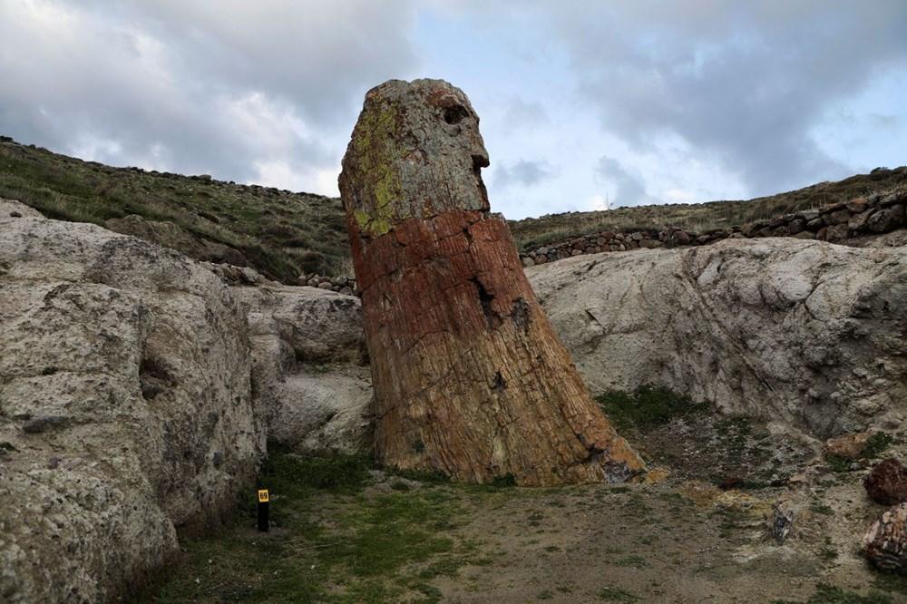 Yunanistan'da 20 milyon yıllık taşlaşmış ağaç bulundu - 11