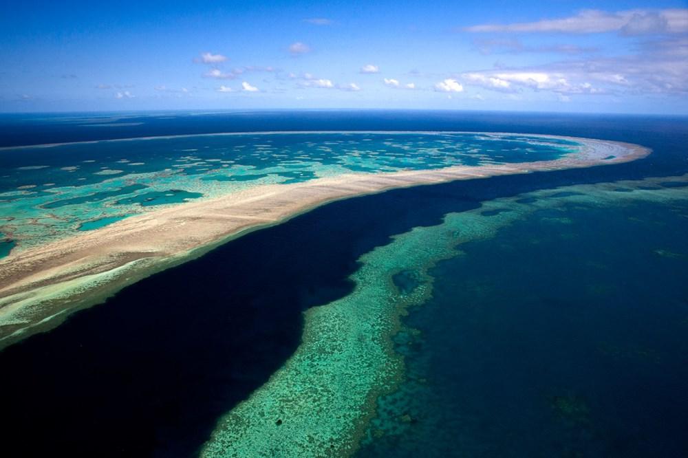İklim değişikliği, Büyük Set Resifi'ndeki mercanların yarısını yok etti - 8