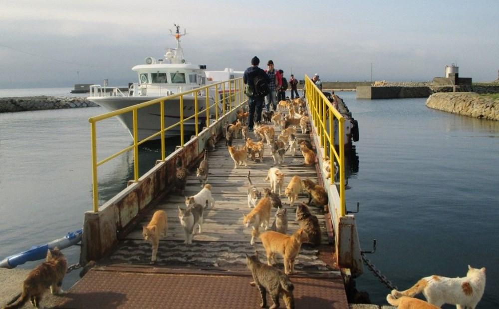 Japonya'daki kedi adası: Aoshima - 5