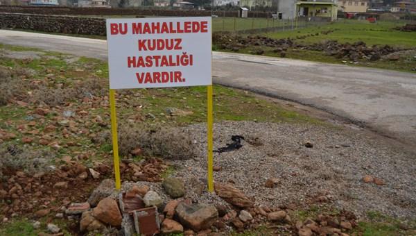 Gaziantep'te bir mahallede 6 aylık kuduz karantinası
