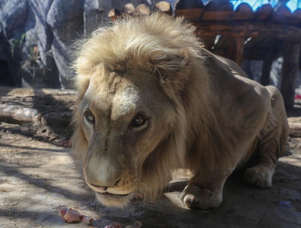 Türkiye'nin yavru aslan ve kaplanları Afrika yolcusu - 6