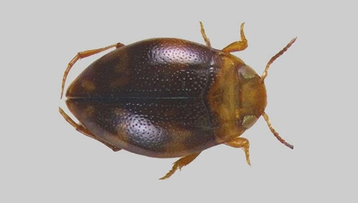 Adıyaman'da yeni bir böcek türü keşfedildi: