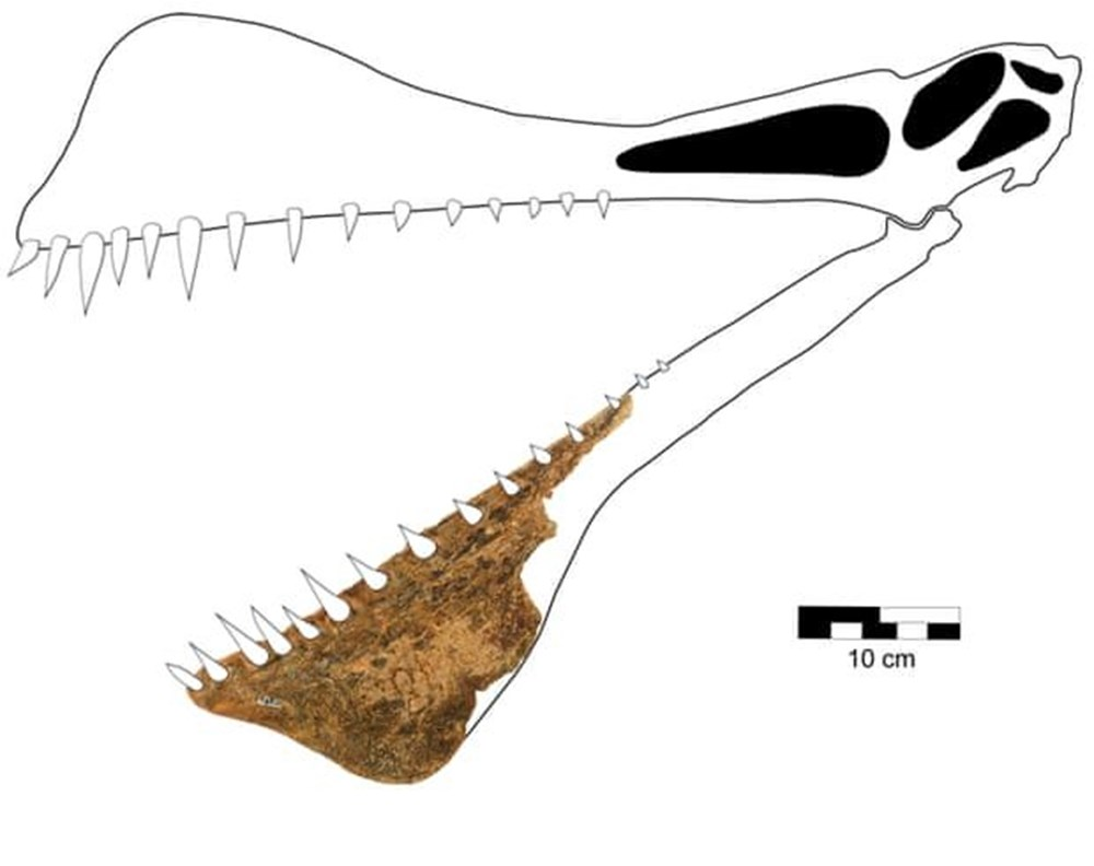 Avustralya'da 105 milyon yıllık teruzor fosili bulundu: Efsanevi bir ejderhaya benzeyen en yakın tür - 3