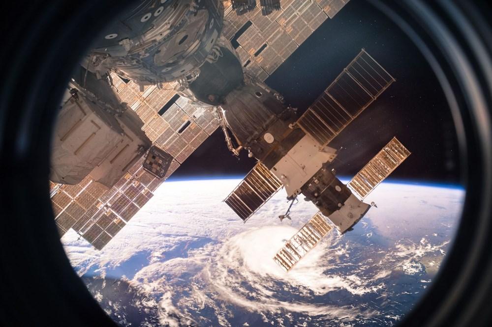 SpaceX ve NASA'nın yavru mürekkep balıkları taşıyan roketi fırlatıldı: İnsanlara çok benzeyen bağışıklık sistemleri var - 10