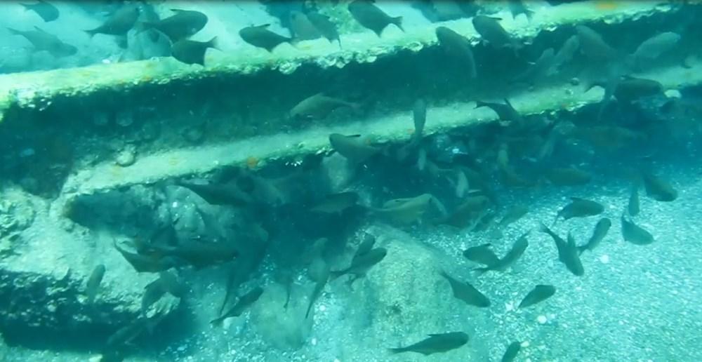 Kızıldeniz'den, Akdeniz'e göçen balık türü 65'e çıktı - 3