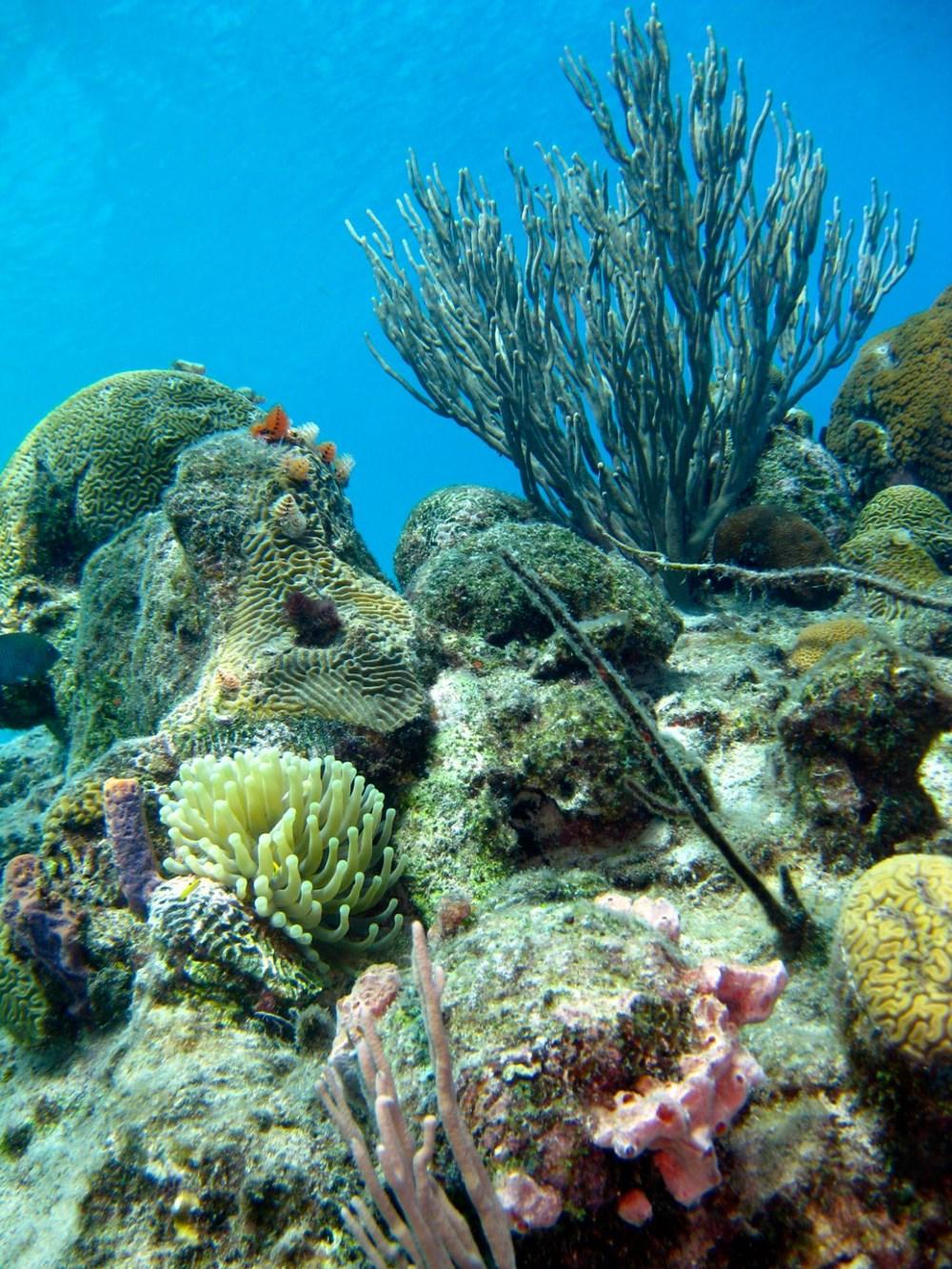 Küresel ısınma, deniz yaşamının kaynağı olan mercan resiflerini yok ediyor - 9