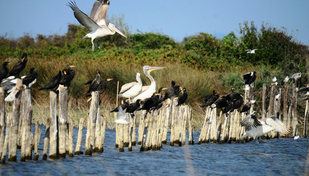 The excitement of 'Stork Migration' started in Eskikaraağaç Village, a member of 'European Stork Villages Association'