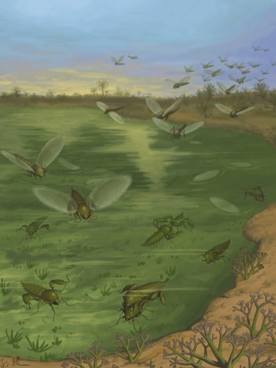 Strashilids sineklerine ait çizim.