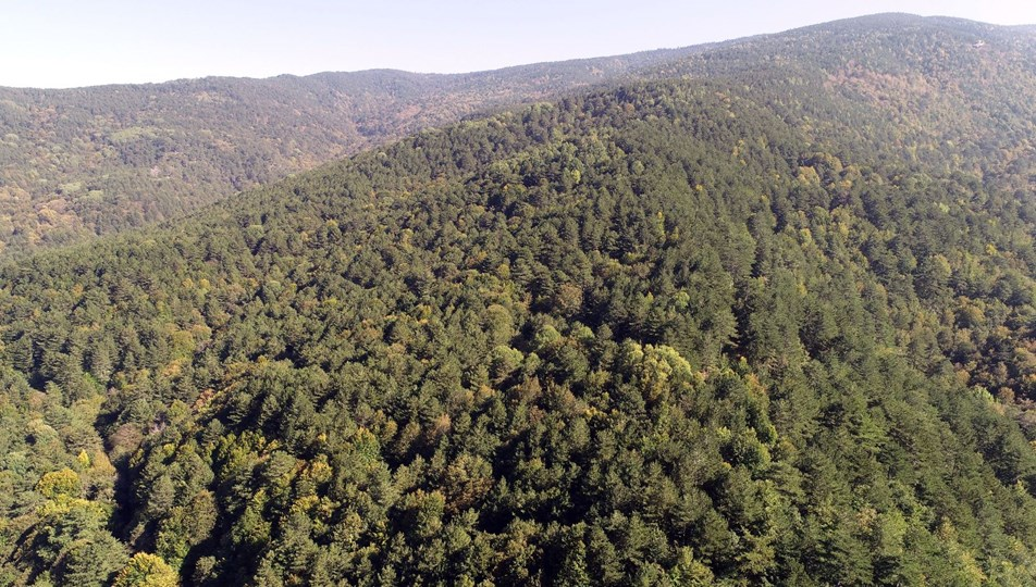 İstanbul, Bursa ve Çanakkale'de ormana giriş yasaklandı